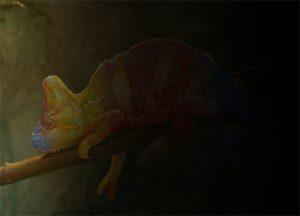 Camaleón de colores oscurecido hacia la derecha