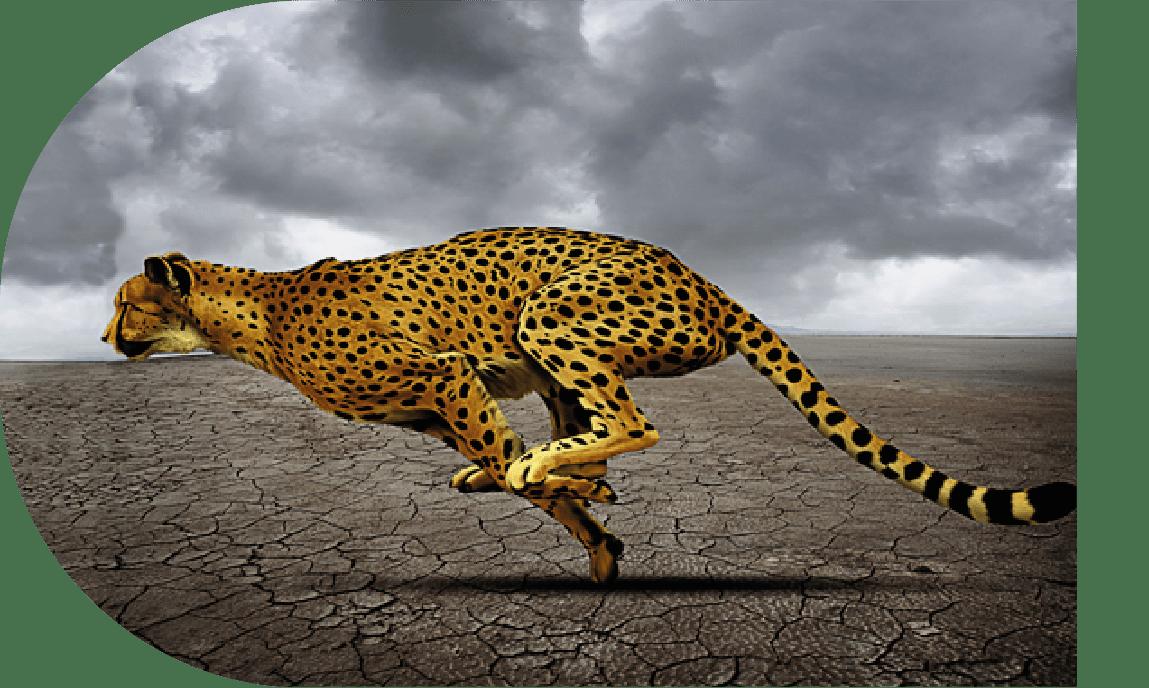 leopardo rapidez soluciones rápidas